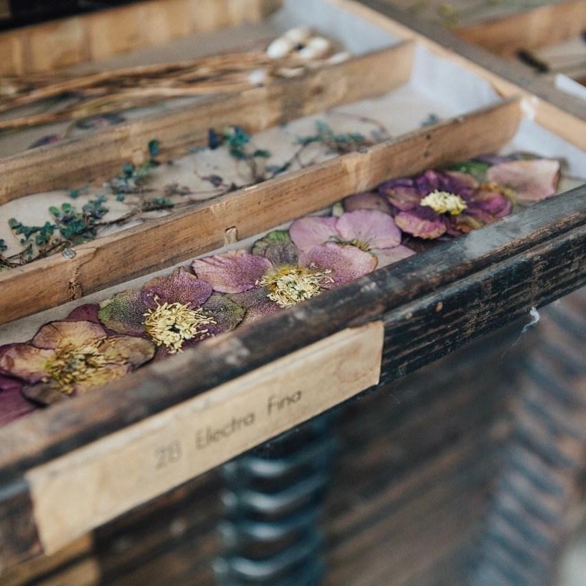 Taller-de-flores-prensadas-imagen-destacada-1
